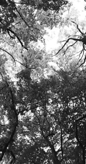 GRAU/T LITTLE PAINTINGS MUSIC VIDEO